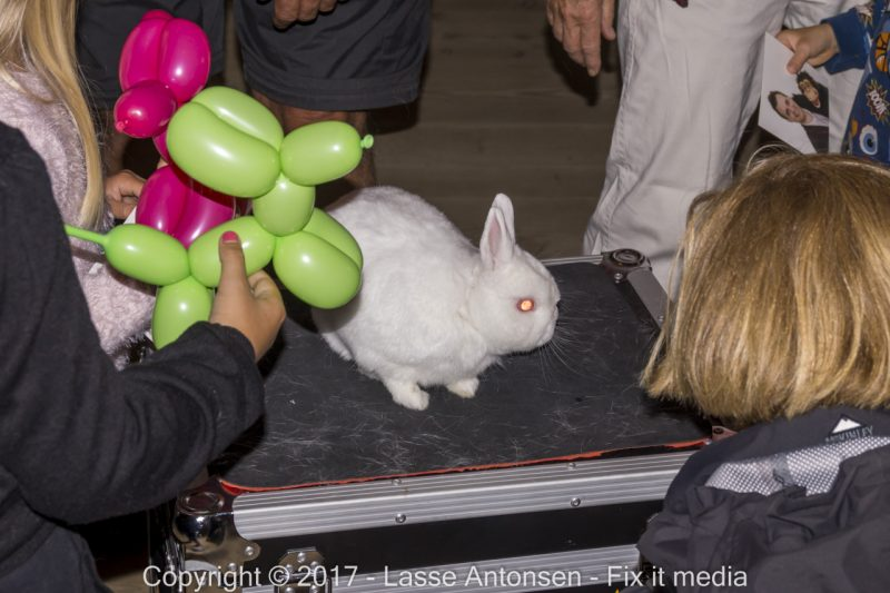 trylleshow, ballondyr, børn, underholdning, kanin